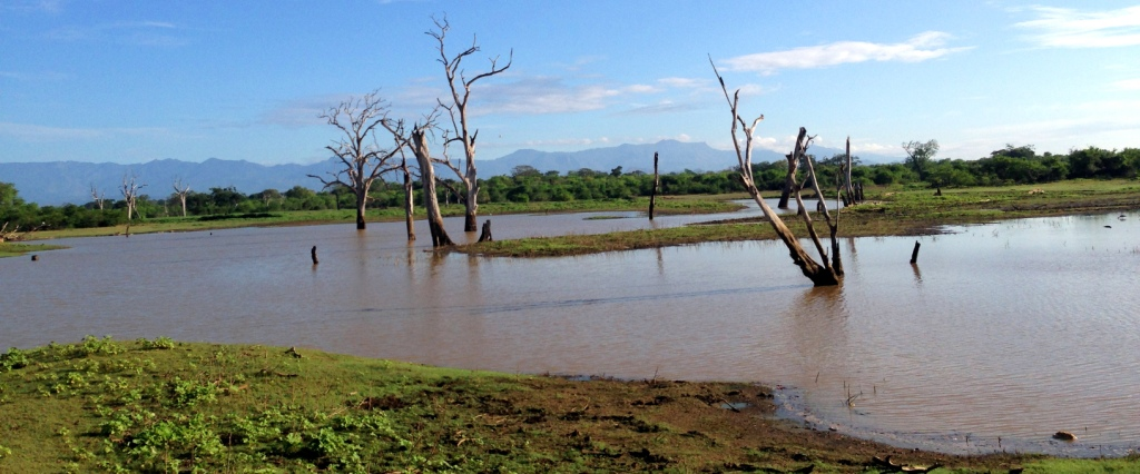 safari-sri-lanka-udawalawe