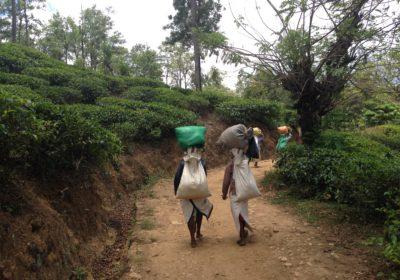 Was Nachhaltigkeit ist und wie du sie auf deinen Reisen integrierst – Interview mit Yvonne von Fairaway Travel