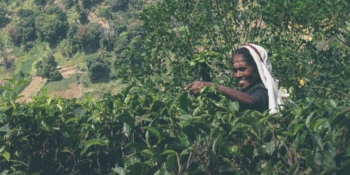 Sri Lanka wie es leibt und lebt – Teil 2 unserer Reiseroute: aktiv im Hochland