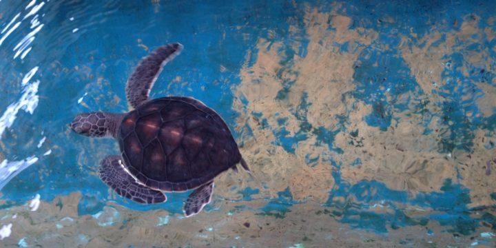 7 Fun Facts über Meeresschildkröten, die ihr noch nicht wusstet